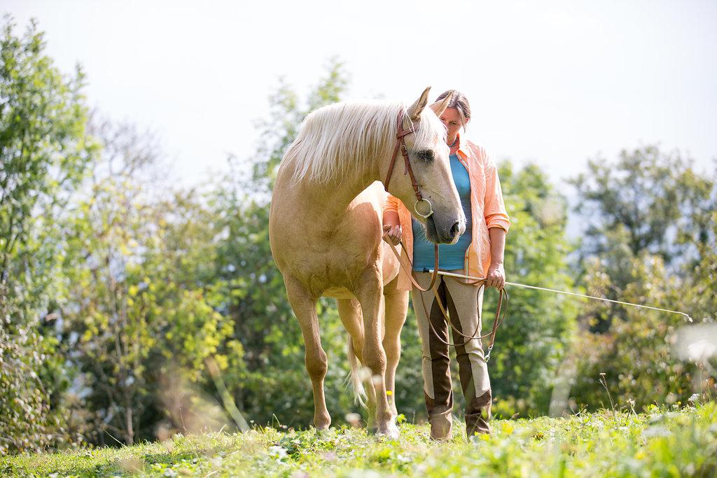 Was ist ein Pferd wert?