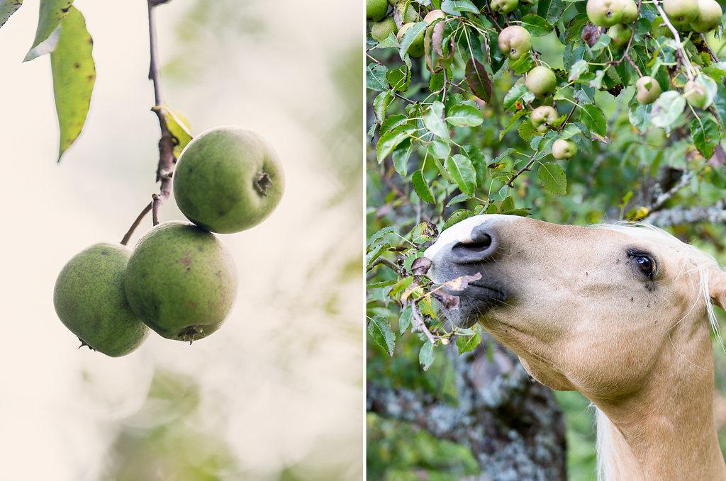 Nach welchen Früchten willst Du greifen? 3 Fragen, die Dich weiterbringen