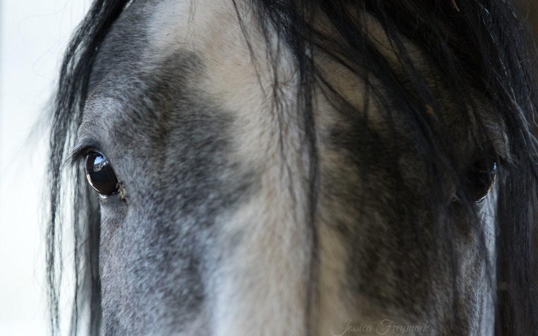 Quiz zur Pferdemimik – kannst du Pferde lesen?
