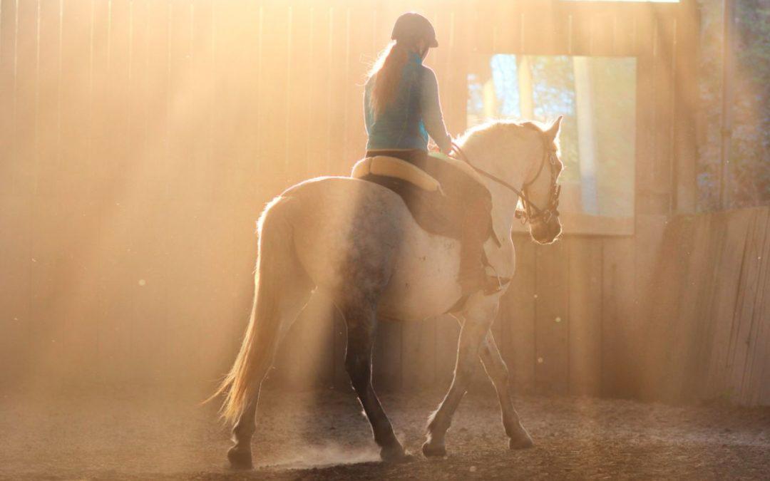 Korrekte Linienführung: Erste Meilensteine in der Pferdeausbildung und Grundlage für eine spätere Versammlung