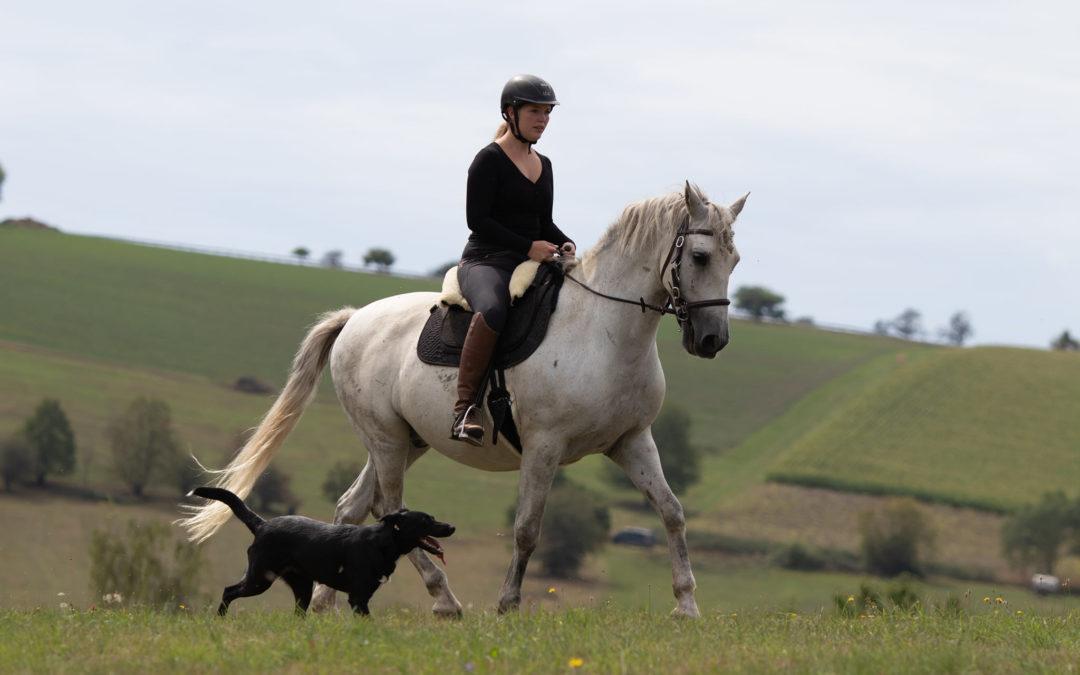 Flexibilität oder Kontinuität im Pferdetraining?